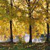 Herbstimpressionen an der Saale
