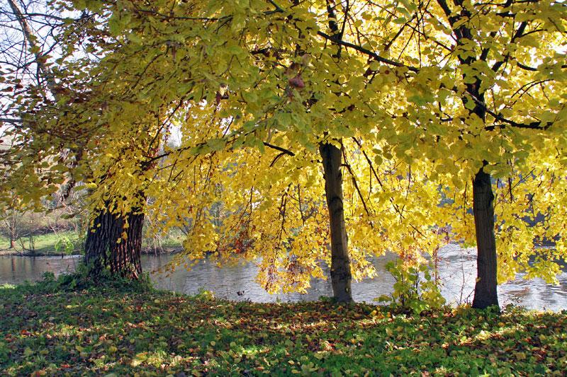 An der Saale im Herbst